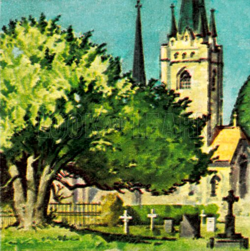 Yew tree in a church yard. NB: Scan of small illustration.