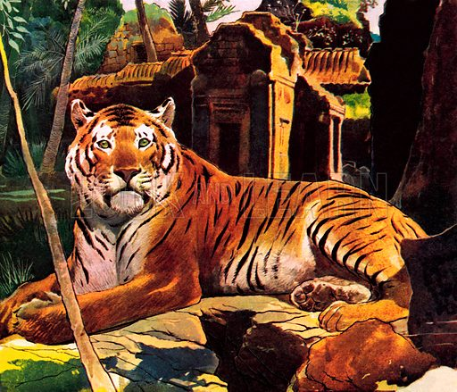 Tiger in the ruins.