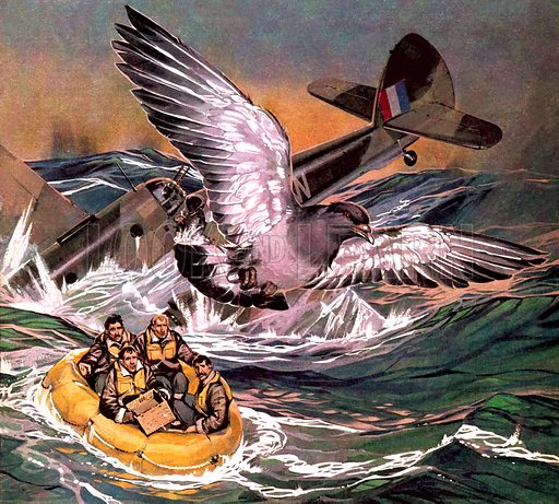 Winkie - the bravest RAF messenger pigeon in WW2 – Historical articles and  illustrationsHistorical articles and illustrations | Look and Learn