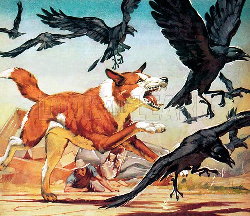 Famous Animals: Bimbo of the Outback. When Sandor Gubonyi was trapped under the crashed wreckage of his lorry in the desolate West Queensland outback, the crows began to gather. Suddenly, a stray cattle dog came out of the wilderness to protect him….