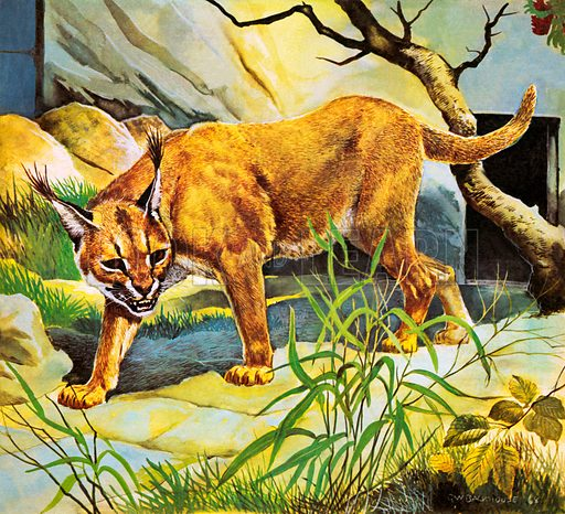 Who's Who in the Zoo: The King's Pet Cat.