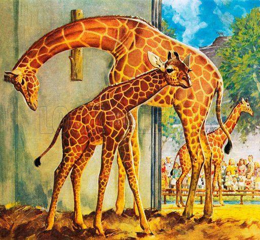 Who's Who at the Zoo: Virginia the Giraffe.
