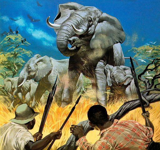 The Ivory Poachers -- Wildlife in Danger.