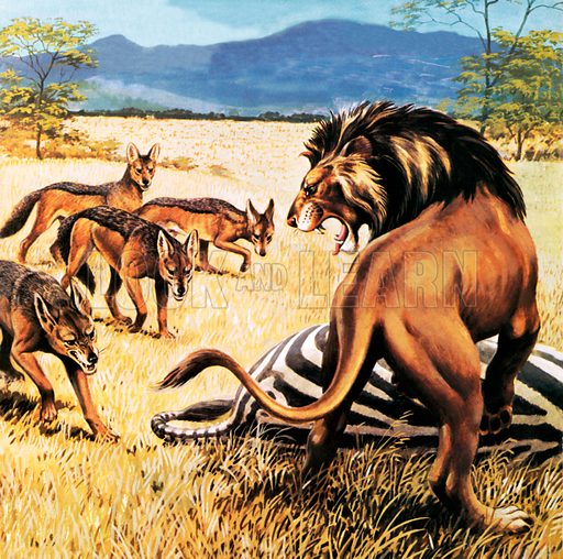 Hyenas coming to clear up after a lion