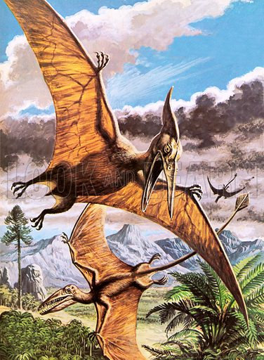 Pteranodon, picture, image, illustration