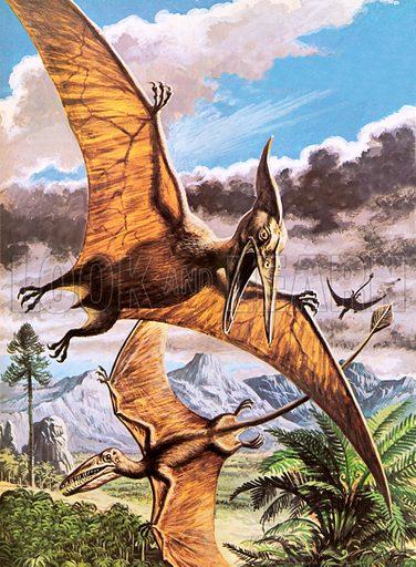 Pteranodon (top) and Rhamphorhynchus (bottom).