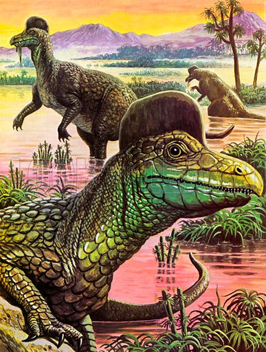 Corythosaurus.  The crest adorning the head of the unusual looking Corythosaurus has puzzled scientists for many years.