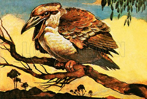 Kookaburra.  NB: Scan of small illustration.