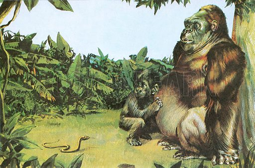 Gorilla frightened by snake. NB: Scan of small illustration.