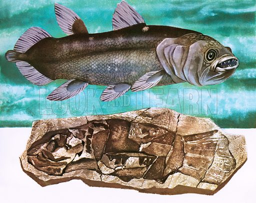 Coelacanth and fossil, picture, image, illustration