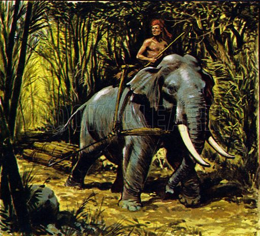 Bandoola – King of the Elephants. Bandoola, the Burmese elephant, worked in the teak forests of central Burma. NB: scan of small illustration.