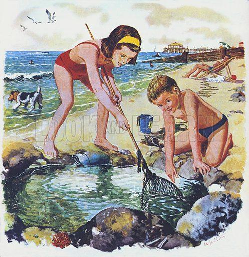 Searching a rock pool.