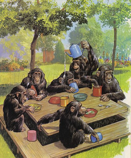 Chimps tea party at the Zoo