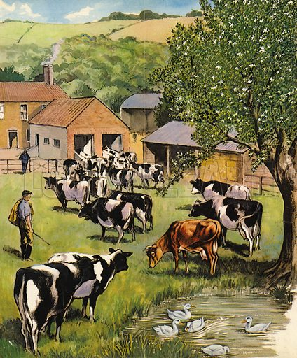 Dairy farm, picture, image, illustration