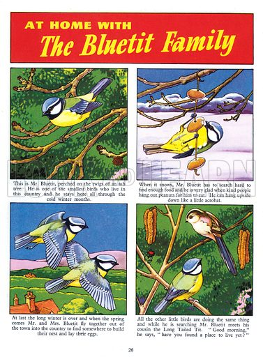At Home with the Bluetit Family. Comic strip from Jack and Jill Book 1957.