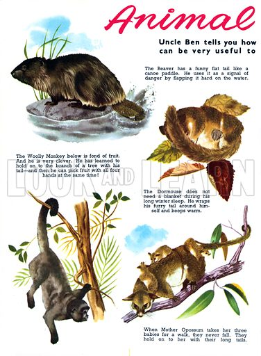 Animal Tails. Feature from Jack and Jill Annual 1964.