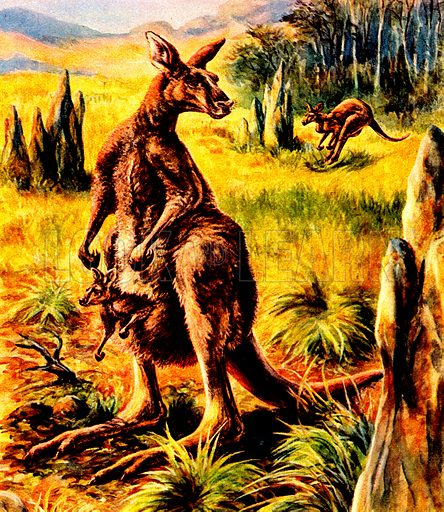 The Kangaroo, mother with a built in pram.