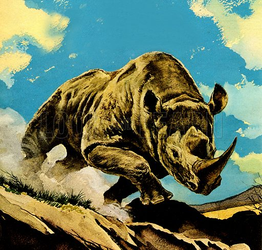 The Rhino.