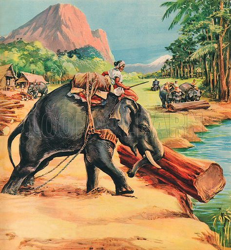 Elephant. Illustration from Elephant Bill by Liuet. Col.  J. H. Williams.