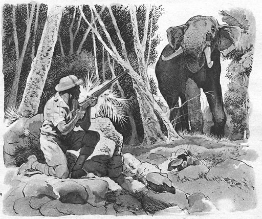 Wild Elephant! Illustration from Elephant Bill by Lieut.-Col. J. H. Williams.