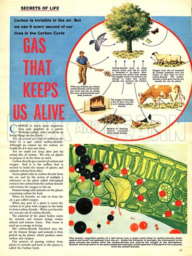 Secrets of Life: Gas That Keeps Us Alive. Carbon and the carbon cycle.