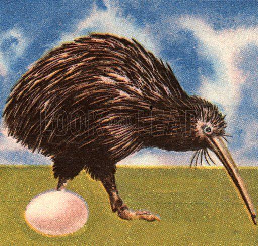 Wonders of Nature: The Worlds Strangest Bird. The Kiwi.