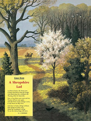 "A Shropshire Lad. A. E. Housman's lyrical book of verse includes the lines ""Loveliest of trees, the cherry now is hung with bloom along the bow, and stands about the woodland ride wearing white for Eastertide.""."