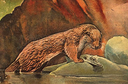 Wonders of Nature: Swimming Lessons for Otters.