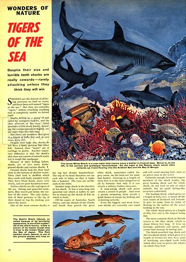 Wonders of Nature: Tigers of the Sea -- the shark.