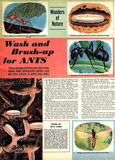 """Wonders of Nature: Wash and Brush-up for Ants. """"These amazing creatures can clean themselves, build underground castles -- adn get other insects to make their beds!."""