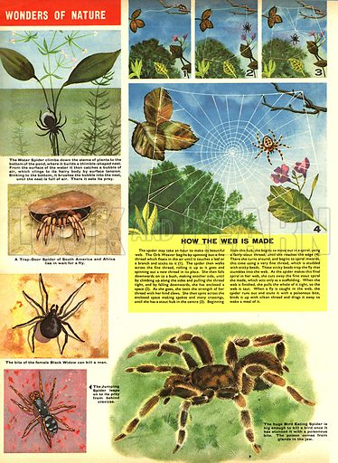 Wonders of Nature -- How spiders spin a web.