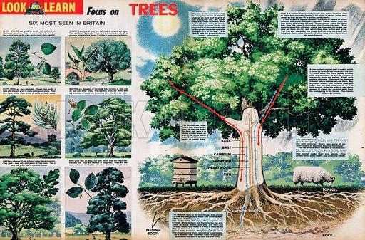 Focus on Trees.