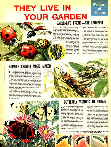 Wonders of Nature: They Live in Your Garden... the ladybird, the grasshopper and the butterfly.