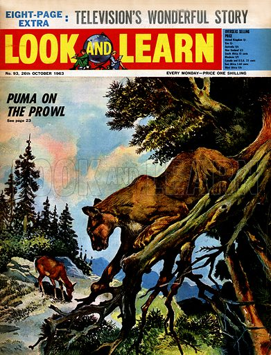 Puma on the Prowl.