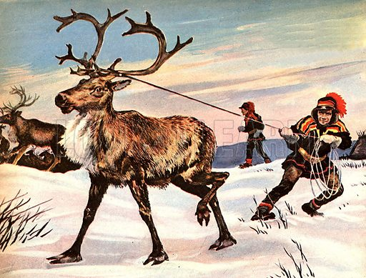 Wonders of Nature: Rudolph's Nose is Never Red... because nature has provided him with fur to keep warm -- as well as the animal equivalent of earmuffs and snowshoes to combat the fierce Arctic winter.