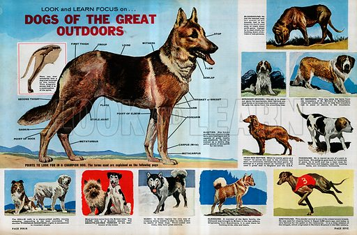 Look and Learn Focus on Dogs of the Great Outdoors.