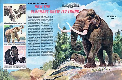 Wonders of nature: How the Elephant Grew Its Trunk.
