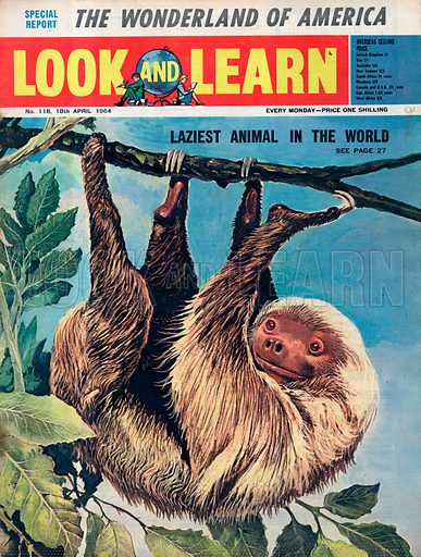 The Laziest Animal in the World -- the Sloth.