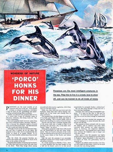 Wonders of Nature: 'Porco' Honks for his dinner -- porpoises are amongst the most intelligent creatures in the sea.
