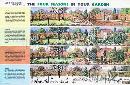 Look and Learn Focus on The Four Seasons in Your Garden.