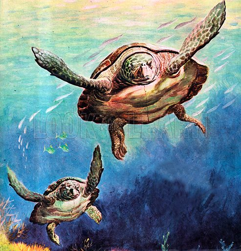 The Flight of the Green Turtle.