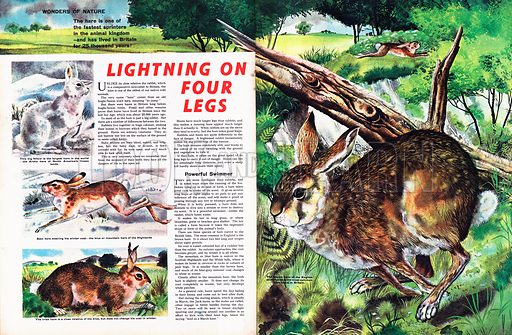 Wonders of Nature: Lightning of Four Legs -- the wild hare.