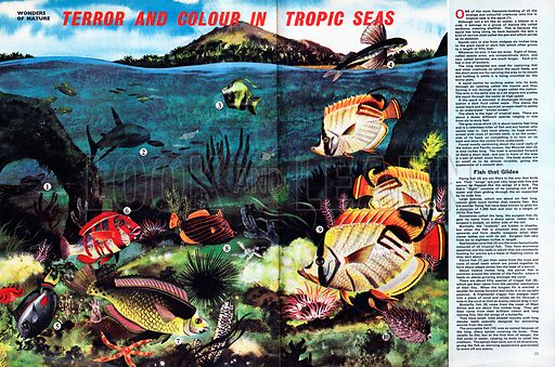 Wonders of Nature: Terror and Colour in Tropic Seas.