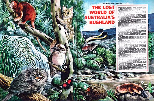 Wonders of Nature: The Lost World of Australia's Bushland.