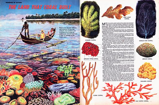 Wonders of Nature: The Land That Coral Built.