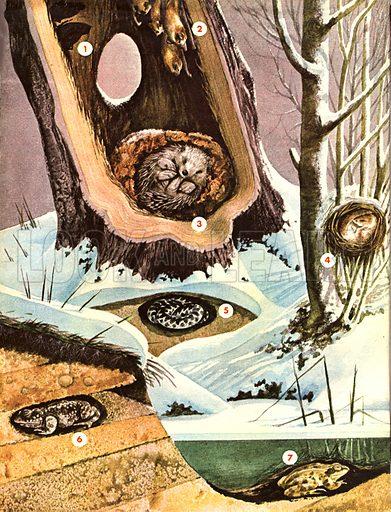 Wonders of Nature: Sleeping the Winter Away. Hibernation.