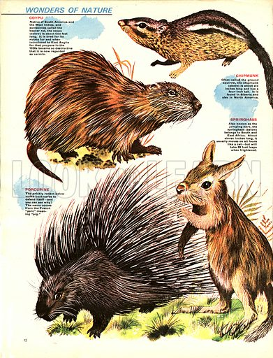 Wonders of Nature -- Terrors With Their Teeth. Rodents need to gnaw to stop their teeth growing.