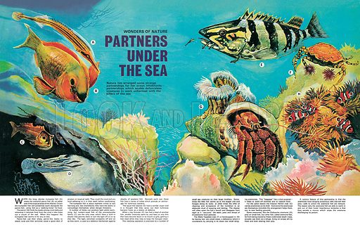 Wonders of Nature: Partners Under the Sea. Nature has arranged some strange partnerships for her ocean inhabitants. Professionally re-touched image.