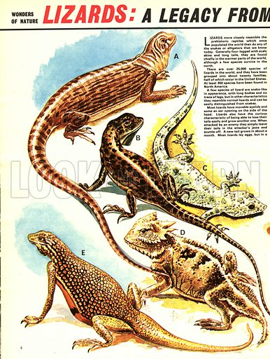 Lizards: A Legacy from Long Ago.