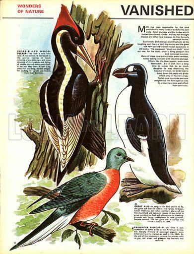 Wonders of Nature: Vanished Birds Slain by Man.